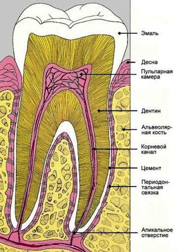 Михаил Столбов как я вырастил новые зубы