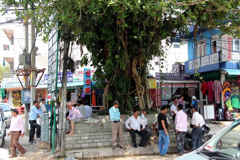 Священное дерево и обыватели Покхары.