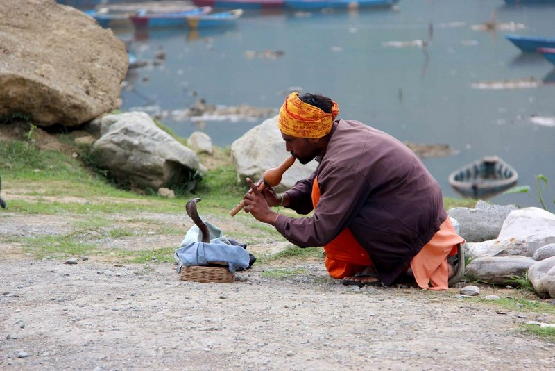 Индус в Покхаре с коброй