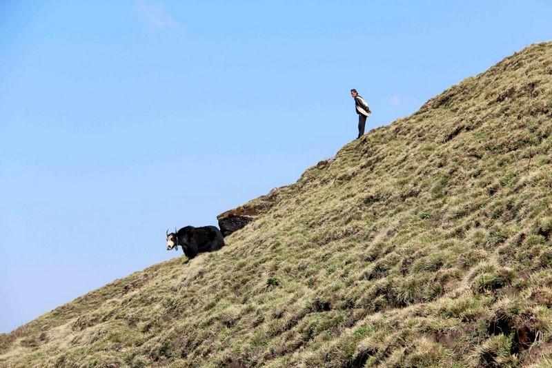 Непалец с яком на склоне