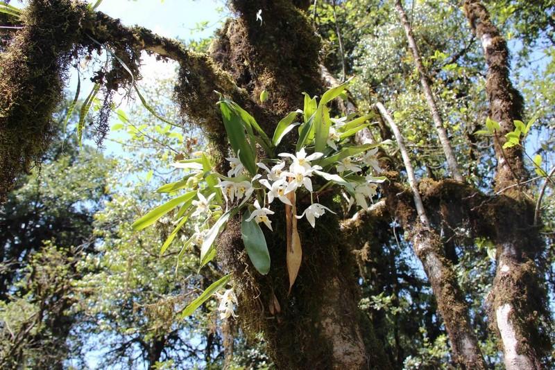 Орхидеи в своей природной нише